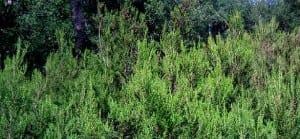 plantes rhume-santecool