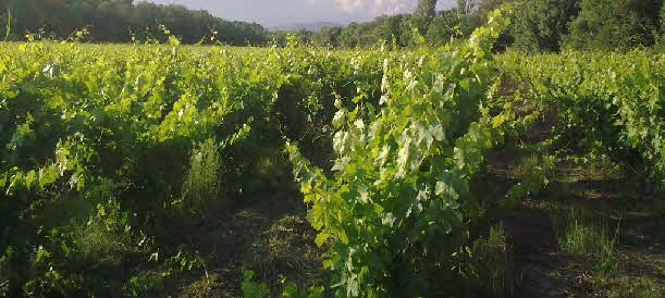 Vive les vins bios