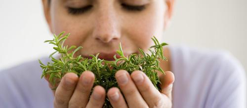 plantes-santecool