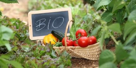 jardin-sans-pesticides-santecool