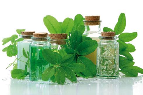 libre-usage-dess-plantes-en-danger-santecool