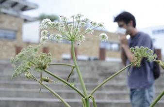 plante-invasive-santecool