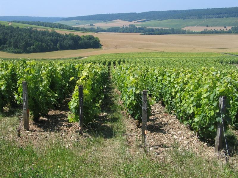 vigneron-santecool