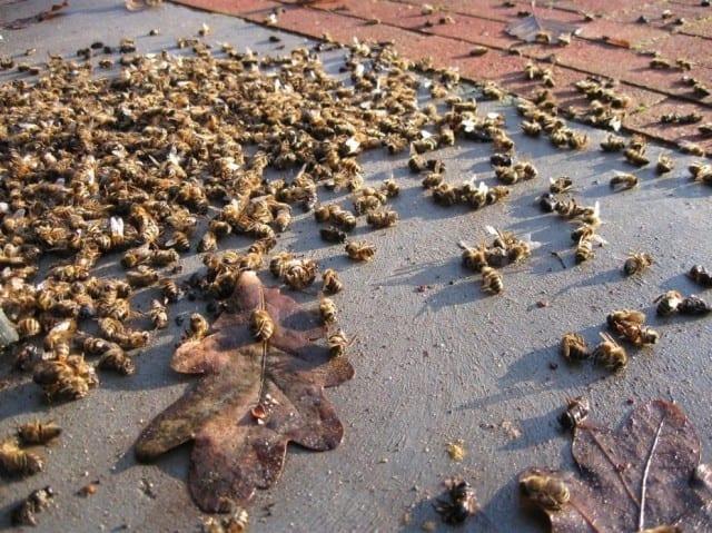 L-arrêté-qui-tue-les-abeilles-santecool