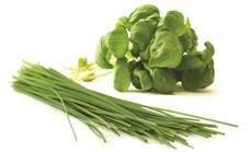 recette-ciboulette-fines-herbes-tartare-santecool