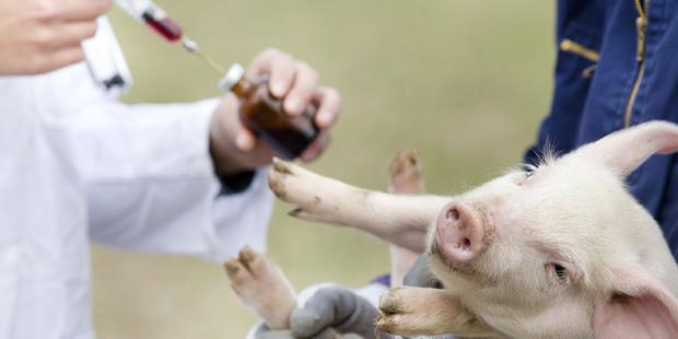 Un-grand-pas-contr-le-recours-aux-antibiotiques-pour-les-animaux-santecool