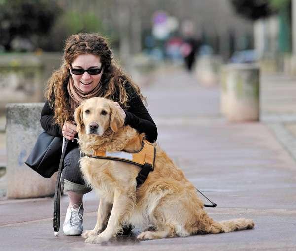 chien-guide-d-aveugle-un-chien-guide-ça-change-la-vie-santecool