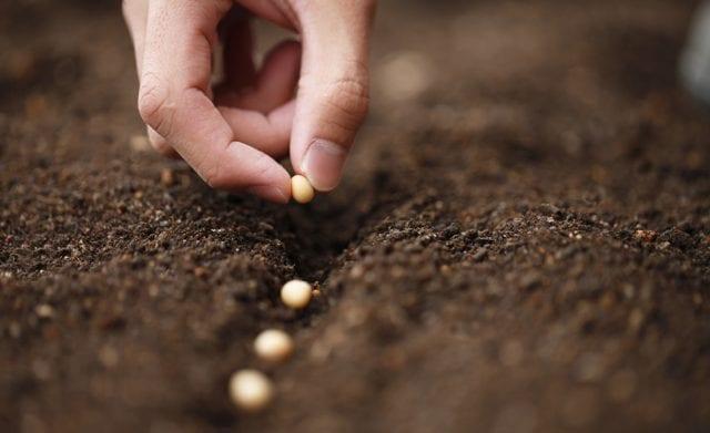 Plantons-des-graines-pour-lutter-contre-le-changement-climatique-santecool