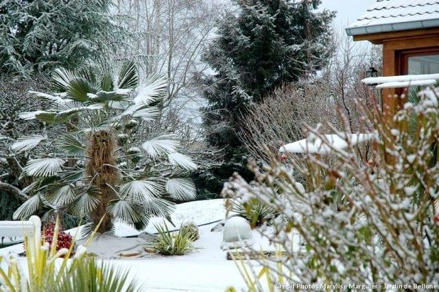 Prot ger vos plantes du froid santecool for Plantes exterieur resistant gel