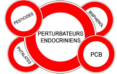 Perturbateurs-endocriniens-du-nouveau-santecool