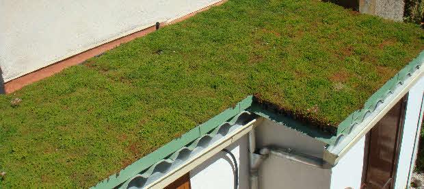 et si vous faisiez une toiture vegetalisee. Black Bedroom Furniture Sets. Home Design Ideas