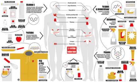 Les pathologies neuro-développementales et les perturbateurs endocriniens
