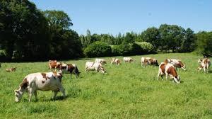 Vers des systèmes d'élevage vertueux pour l'alimentation humaine