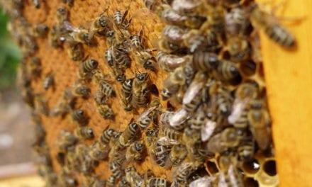 Pour une traçabilité du miel