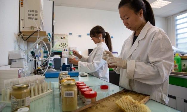 L'Université de Corse, une « ruche » scientifique pour le miel de Corse