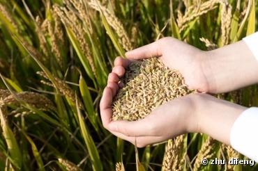 Plan d'action du gouvernement pour une agriculture plus saine