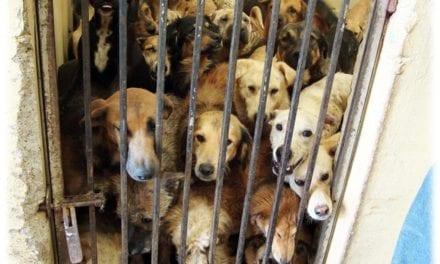 Pour venir en aide aux animaux abandonnés dans les refuges