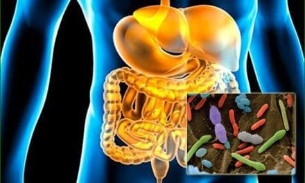 Quand une bactérie intestinale aggrave le syndrome métabolique et qu'un probiotique le soulage
