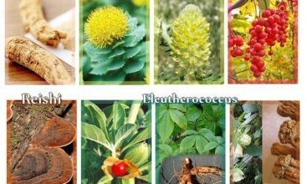 Les bienfaits des plantes adaptogènes