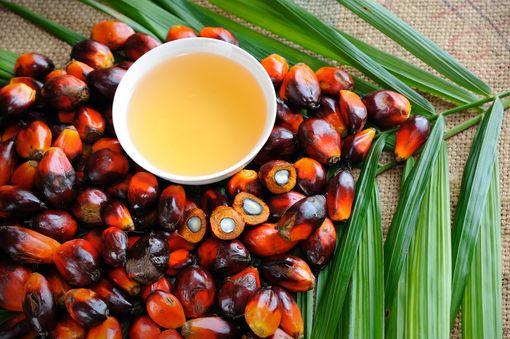 L'huile de palme rouge, une huile 100% bio et responsable