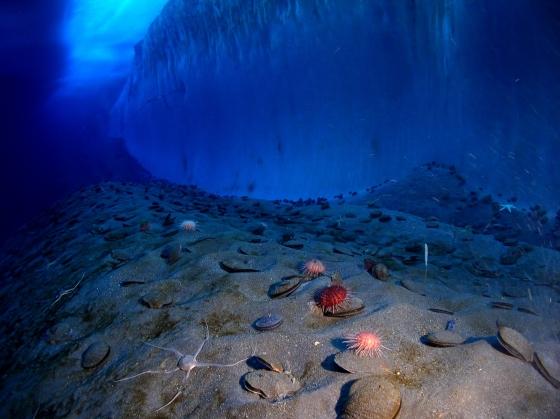 «OCÉAN, Une plongée insolite» au Muséum national d'Histoire naturelle