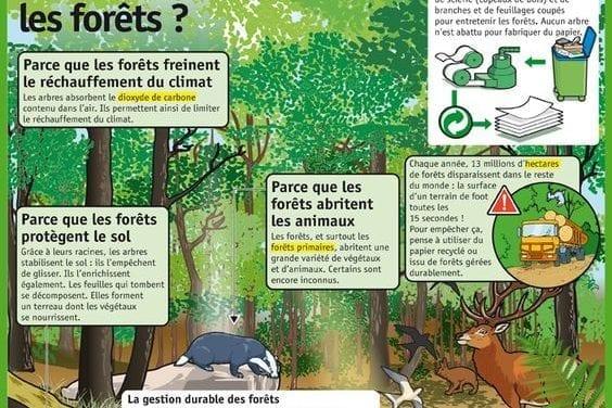 En mars, c'est le mois de forêt!