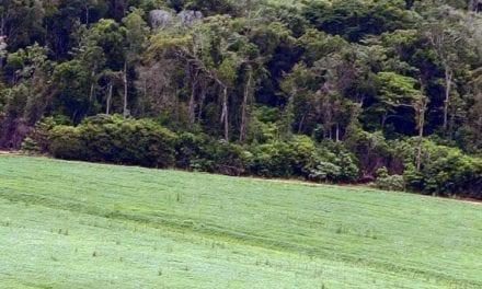 Le soja est partout et favorise la déforestation