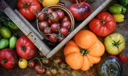 Non, la tomate n'est pas un légume de printemps!