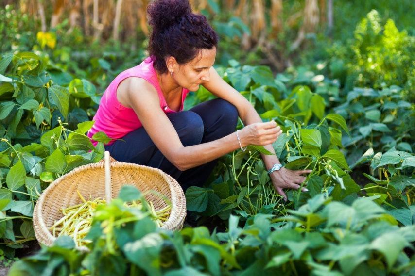 Cueillette, attention aux plantes toxiques!