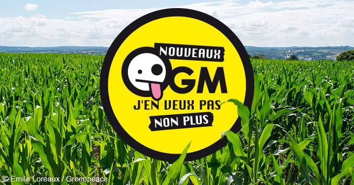 Un an après l'arrêt européen sur les nouveaux OGM, où en est-on ?