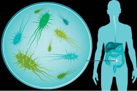 Nahibu analyse notre microbiote intestinal