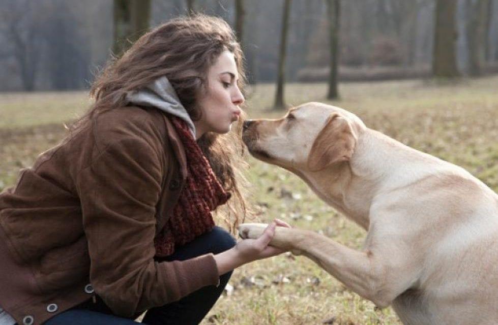 Le meilleur ami de votre cœur est le chien