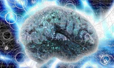 Le cryptochrome, une protéine qui répare le cerveau