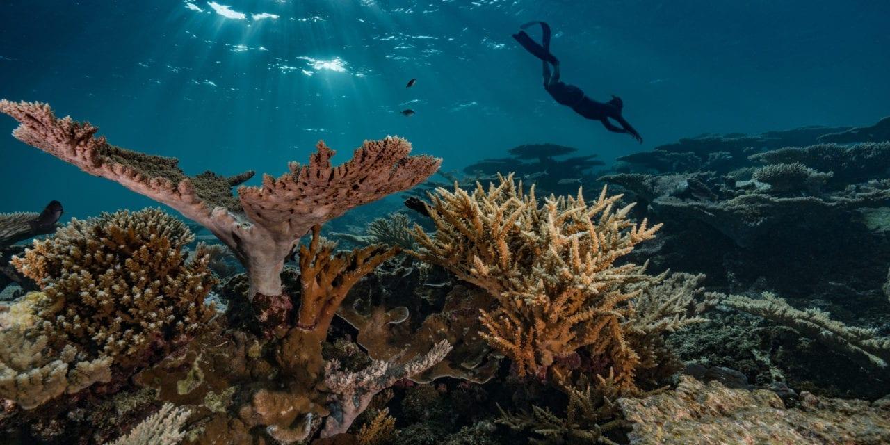 Récifs coralliens, cœur de l'océan