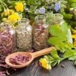 Comment les plantes peuvent-elles agir sur la santé ?