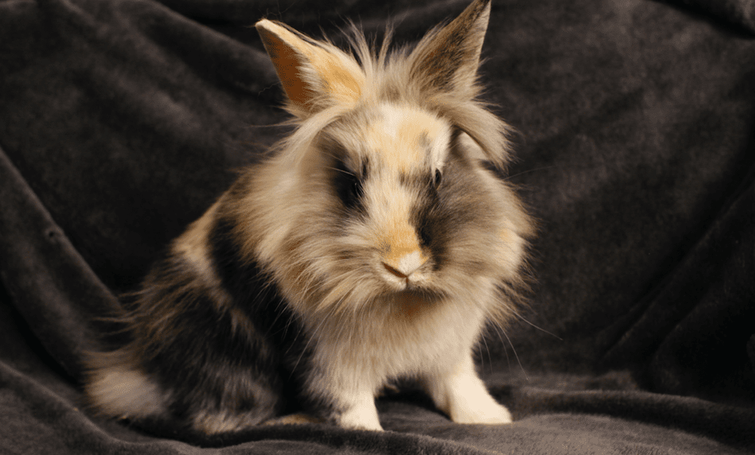 LUSH se mobilise contre l'abandon des lapin