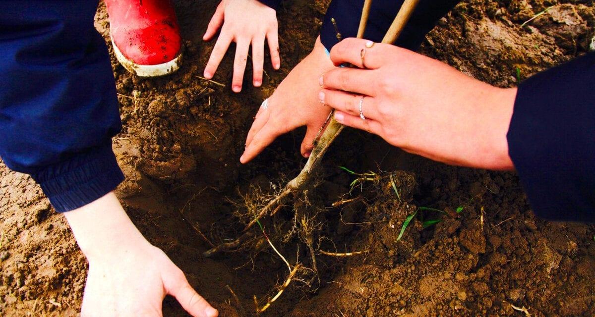 Quand les enfants s'engagent pour la reforestation