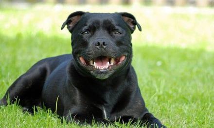 Il n'y a pas de races de chiens plus dangereuses que d'autres