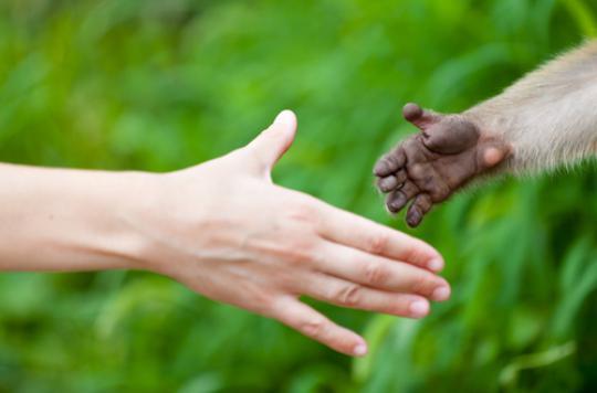 Un an de pandémie : décrypter les liens étroits entre la santé humaine et la santé animale