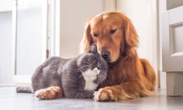 Ne traitez pas votre chat avec un antiparasitaire pour chien