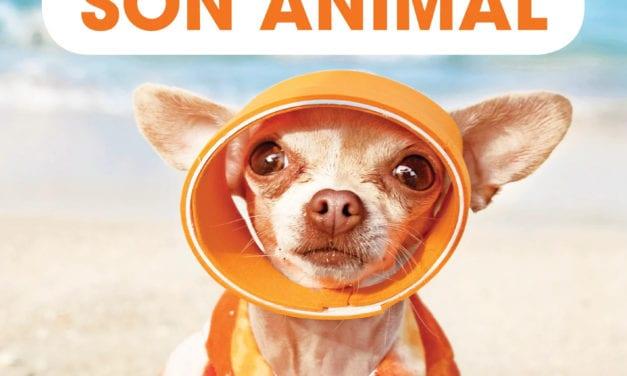 Conseils pour partir en vacances avec votre animal